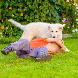 dog jumps on toddler