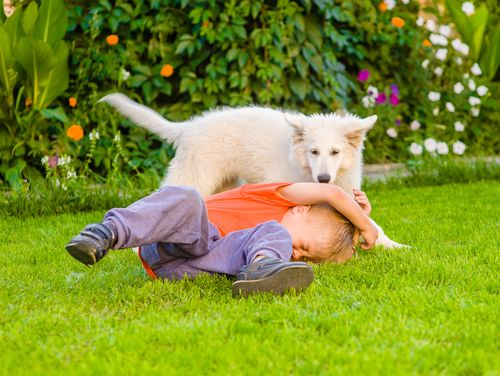 How To Recover Damages In California From A Dog Bite